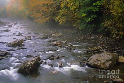 Autumn Mist Cranberry River Art Print