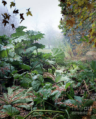 Photograph - Autumn Mist, Great Dixter Garden by Perry Rodriguez