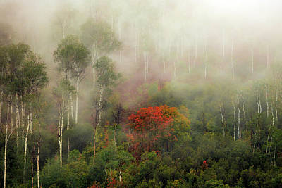 Photograph - Autumn Mist by Johnny Adolphson