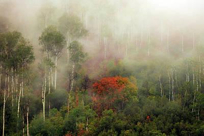 Photograph - Autumn Mist by Johnny Adolphson