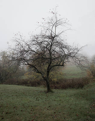 Photograph - Autumn Mist by Michael Friedman