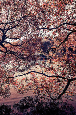 Photograph - Autumn Mix. Airy Lace Of Autumn by Jenny Rainbow