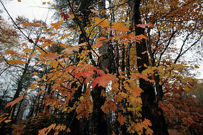 Photograph - Autumn Moist by Patrick Groleau
