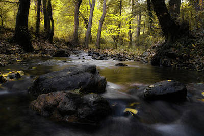 Photograph - Autumn Mood 09/11/17 by Plamen Petkov