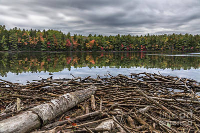 Photograph - Autumn Mood by Karin Pinkham