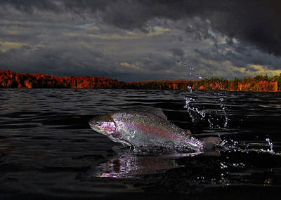 Rainbow Trout Photograph - Autumn Morn by Brian Pelkey