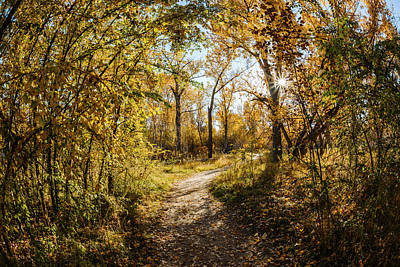 Photograph - Autumn Morning Along Green Belt In Boise Idaho by Vishwanath Bhat