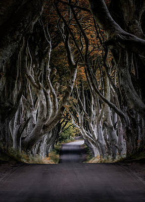 Photograph - Autumn Morning At Dark Hedges Alley  by Jaroslaw Blaminsky