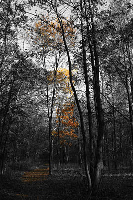 Photograph - Autumn Morning II by Dylan Punke