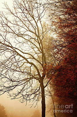 Art Print featuring the photograph Autumn Morning by Stephanie Frey