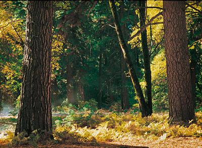 Autumn Morning Yosemite National Park Art Print by Edward Mendes