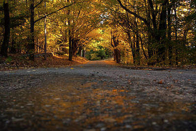Photograph - Autumn Mornings by Sue OConnor