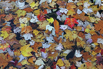 Photograph - Autumn Mosaic by Juergen Roth