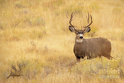 Photograph - Autumn Mulie by Jim Fillpot