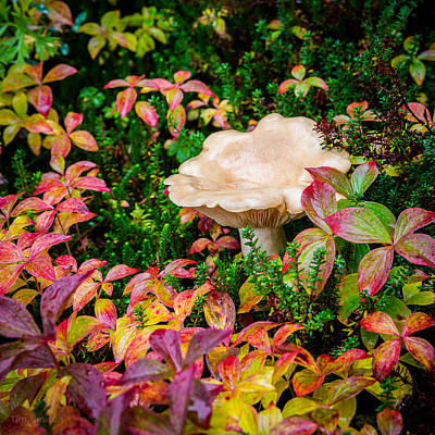 Photograph - Autumn Mushroom by Tim Newton