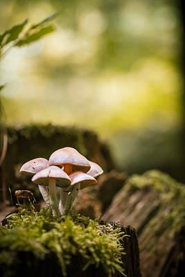 Autumn Mushrooms Art Print