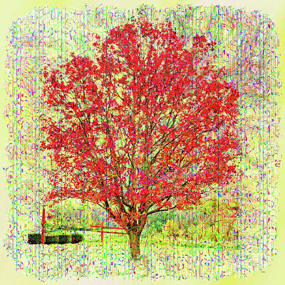 Photograph - Autumn Musings by John M Bailey