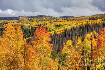 Photograph - Autumn Near Scofield by Spencer Baugh