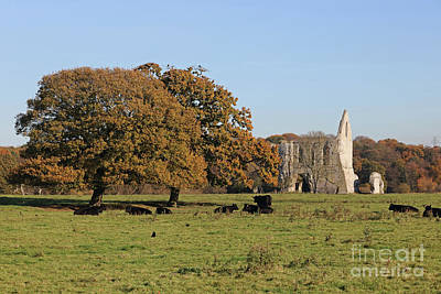 Photograph - Autumn Newark Priory Ripley Surrey Uk  by Julia Gavin
