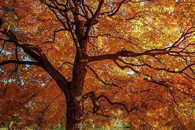 Photograph - Autumn Oak In Forest Park by Garry McMichael