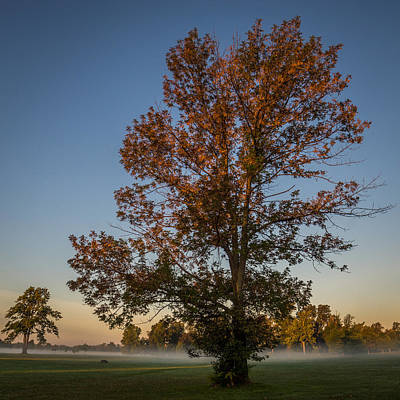 Photograph - Autumn Oak On Misty Meadow by Chris Bordeleau