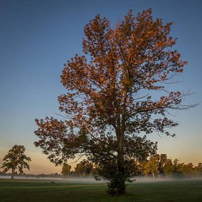 Photograph - Autumn Oak On Misty Meadow by Chris Bordeleau