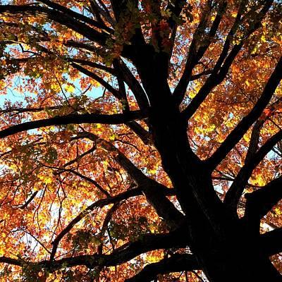 Photograph - Autumn Oak by Paul Kimmerling