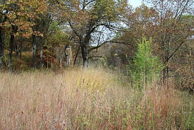 Photograph - Autumn Oak Savanna by Scott Kingery