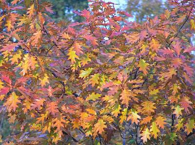 Photograph - Autumn by Oleg Zavarzin