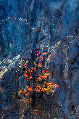 Autumn On A Rock Wall Art Print by Joseph Smith