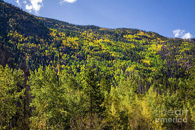 Autumn On Cameron Pass Print by Jon Burch Photography