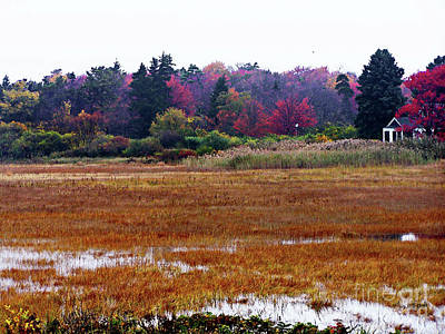 Photograph - Autumn On Drakes Island by Expressionistart studio Priscilla Batzell