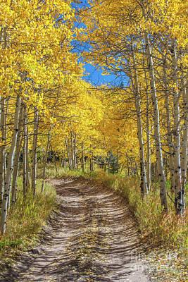 Photograph - Autumn On Medano Pass by Tony Baca