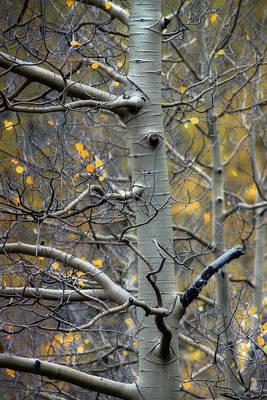 Photograph - Autumn On My Mind by Ellen Heaverlo