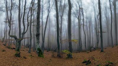 Photograph - Autumn On The Balkans by Plamen Petkov