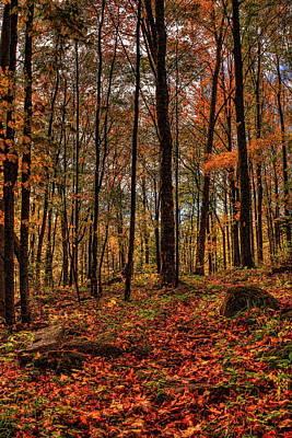 Photograph - Autumn On The Ice Age Trail by Dale Kauzlaric