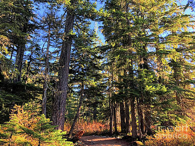 Photograph - Autumn On The Mountain Top by Victor K