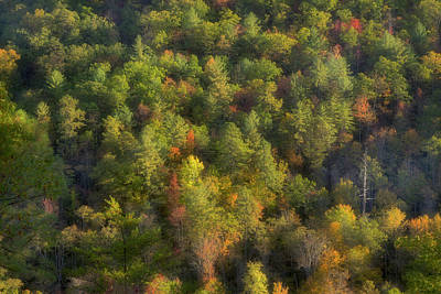 Photograph - Autumn On The Mountainside  by Mike Eingle