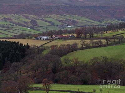 Photograph - Autumn On The North York Moors by Phil Banks