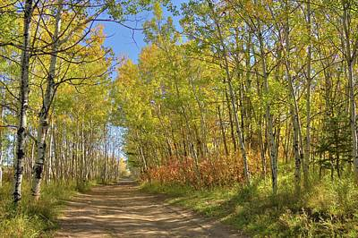 Photograph - Autumn On The Trail by Jim Sauchyn