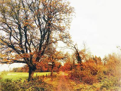 Photograph - Autumn On White by No Alphabet