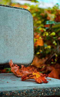 Photograph - Autumn Once Again - Park Bench by Marie Jamieson