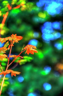 Photograph - Autumn Orange by Jerry Sodorff