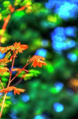 Photograph - Autumn Orange by Jerry Sodorff