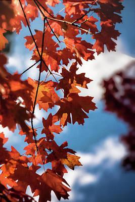 Photograph - Autumn Orange  by Saija Lehtonen