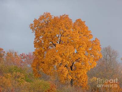 Art Print featuring the photograph Autumn Over Prettyboy by Donald C Morgan