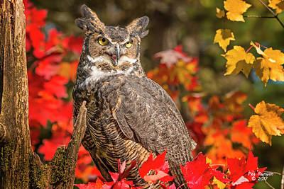 Photograph - Autumn Owl by Peg Runyan