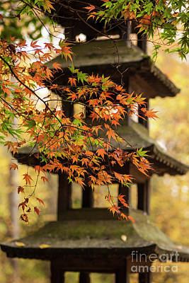 Photograph - Autumn Pagoda by Mike Reid