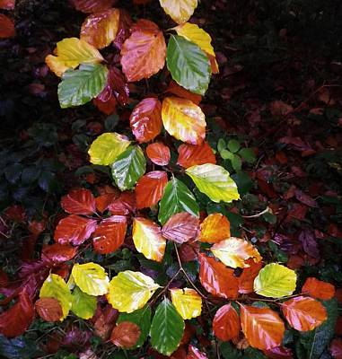 Photograph - Autumn Palette by Richard Brookes