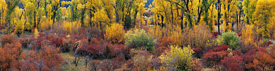 Photograph - Autumn Panoramic by Leland D Howard